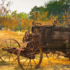 Cart on john Muir Land by John Rourke - Transportation Other ( 2018, u.s.a., john muir national historic site, martinez, california, historic site, john muir, ca )