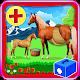 Horse Pregnancy Doctor Surgery