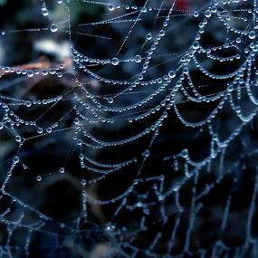 Spider web by Neha Shah  - Abstract Macro