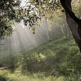 rays by Dušan Gajšek - Nature Up Close Trees & Bushes