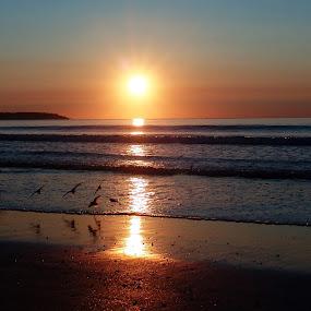 Sunrise over Maine by Anastasiya Manuilov - Landscapes Sunsets & Sunrises ( maine, sunrise, birds )