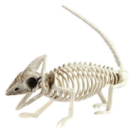 Prop, skelett ödla
