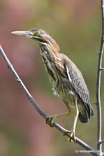 Photo: Bird up close at Alburg Dunes State Park