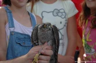 Photo: Anillamiento de aves y puesta de nidos con escolares de Sta Elena