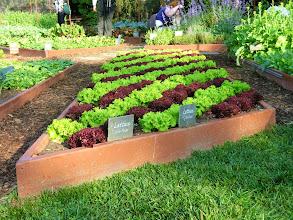 Photo: White House Kitchen Garden