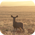 Deer Wallpapers icon