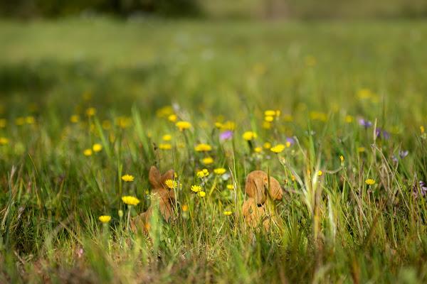 Tra l'erba... di Penelopepizzo