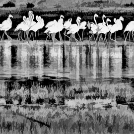 Dance of the flamingos by Kittie Groenewald - Digital Art Animals ( reflections, monochrome, flamingos,  )