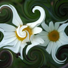crazy flowers by Marijana Gašpić - Abstract Patterns