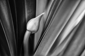 Photo: goodnight all  #floralfriday  #flowers  #bwphotography  #monochromeworld +Monochrome Arty Club #fineartphotography