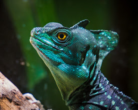 Photo: at the Smithsonian Zoo