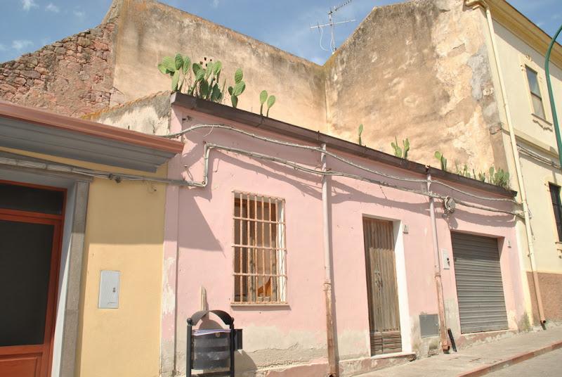 anche i fichi d'india crescono... sui tetti di Pretoriano