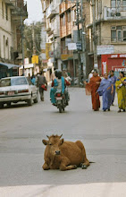 Photo: Die Kuh ist heilig. Da wird herum gefahren