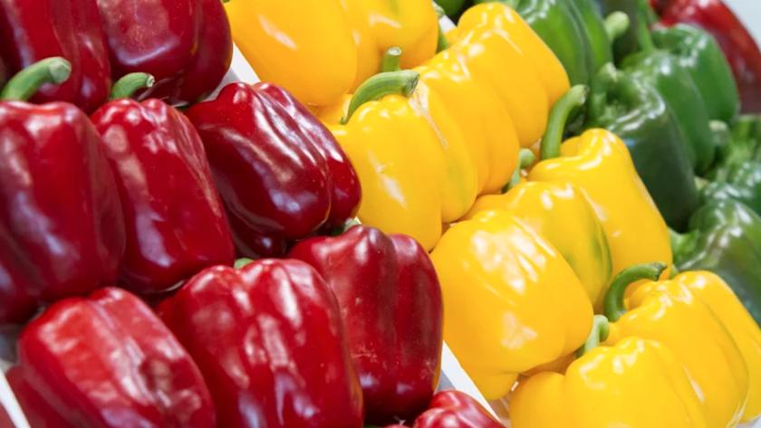 Las frutas y hortalizas almerienses viajan por todo el mundo.