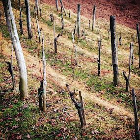 Vinograd by Oliver Bucek - Landscapes Prairies, Meadows & Fields