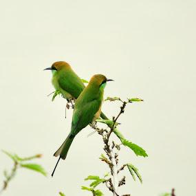 Looking for flies by Alokemoy Basu - Animals Birds ( birds )
