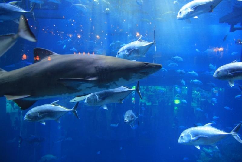 Вражаючих розмірів акваріум в Дубай мол