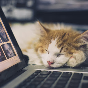 Hard at Work by Jeffrey Zoss - Animals - Cats Kittens ( pwc84, #GARYFONGPETS, #SHOWUSYOURPETS )