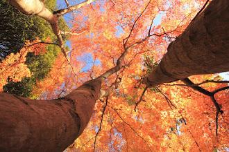 Photo: 冠木
