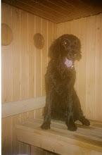 Photo: Lyyli rakasti saunomista ylikaiken.