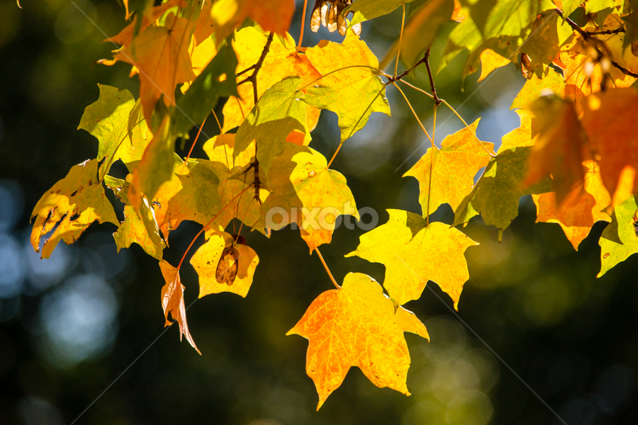 Fall Collection by Vignesh Ponselvan - Nature Up Close Leaves & Grasses
