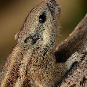 by Ajay Halder - Animals Other Mammals (  )