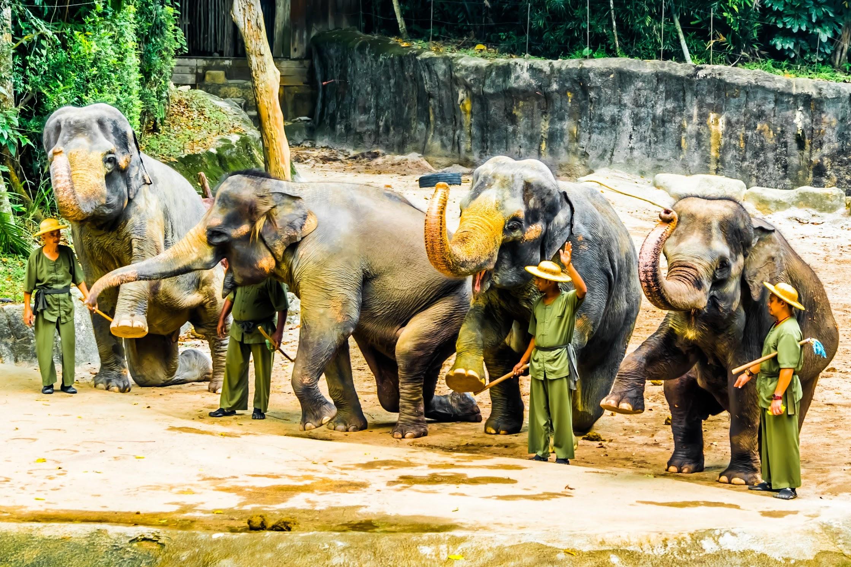 シンガポール動物園 ゾウ3