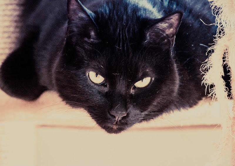 Lo sguardo di Nero di Ro51