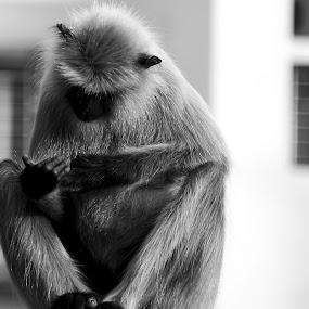 by S S Bhattacharjee - Black & White Animals