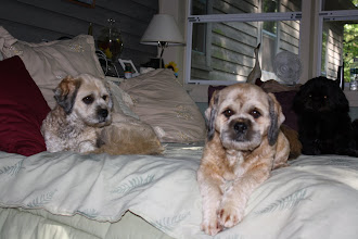 Photo: Ginger and Pepper, the latest editions to the family...adopted on July 8th, 2009
