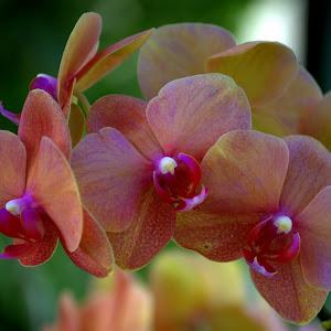 4-4-15 flower spring wkbg 57.jpg