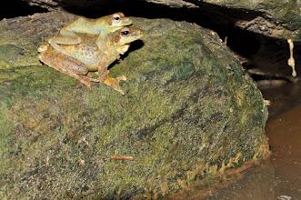 Photo: tree frogs
