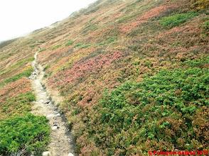 Photo: IMG_4085 i colori dell autunno sull appennino reggiano sullo 00 GIOCATTOLO