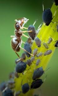 Ant Wallpaper - náhled