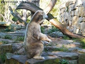 Photo: Knut haelt Ausschau nach der neuen Mitbewohnerin ;-)