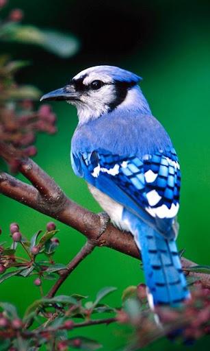 Cute Birds Wallpaper