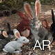 Download AR Rabbits For PC Windows and Mac