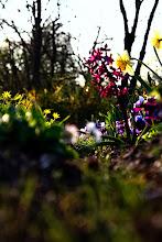 Photo: PJ miniwalk - some flowers