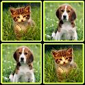 Matching Madness - Animals icon