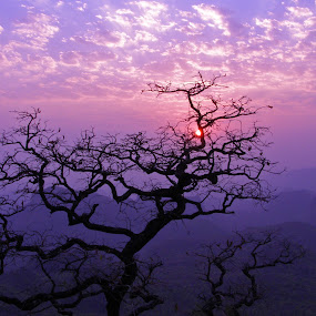 Colors of heaven by Victor Mukherjee - Landscapes Mountains & Hills ( pachmarhi, mountains, sky, purple, tree, silhouette, sunset, twilight, mountains hills tree silhouette sunset sky violet shadow sun nature, india, branches,  )