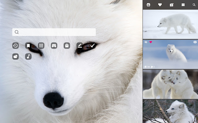 Arctic Fox Hd Wallpapers New Tab Theme