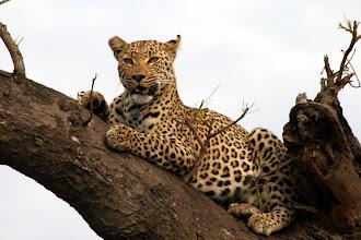 Photo: Kruger National Park, South Africa