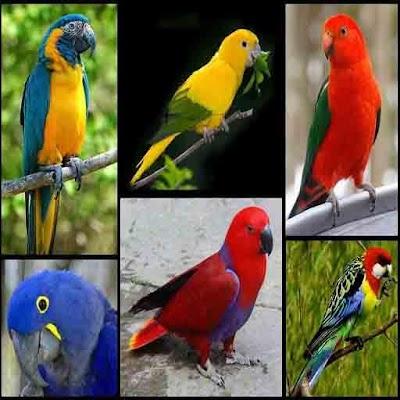 New Birdsong  Best