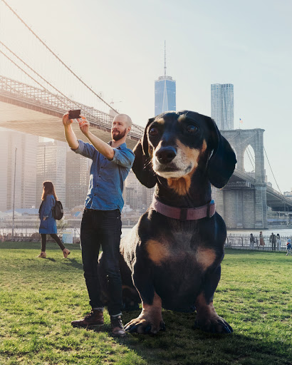 Veja uma série de fotos mostrando uma cadela gigante e seu dono viajando por Brooklyn