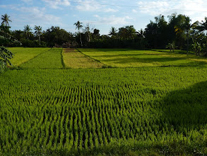 Photo: road with rice fields from Torrijos to Poctoy I walked almost every day to beach there