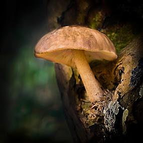 fungi  by Mark Shoesmith - Nature Up Close Mushrooms & Fungi ( macro, fungi, nature, woodland, forest,  )