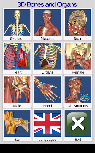 3D Bones and Organs (Anatomy) 3.1.0 screenshots 9