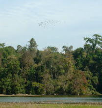 Photo: Birds over La Ee Or twin lakes - Umphang
