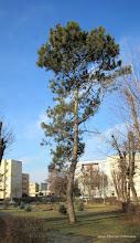 Photo: 2016.01.03 - de pe Str. Rapsodiei