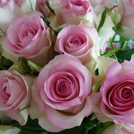For pleasure by Helena Moravusova - Flowers Flower Arangements ( rose, pink, flowers )